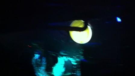 "my little airport 2012成都巡演《罗曼蒂克》国语版""我只想摸你乳房····"""