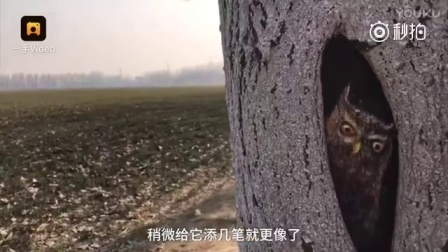 """妙!树疤""""变脸""""呆萌猴子长耳兔"""