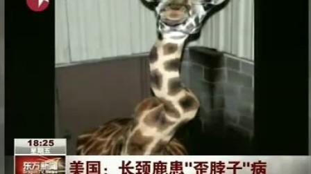 """美国:长颈鹿患""""歪脖子""""病[www.sisterma.com.cn]"""
