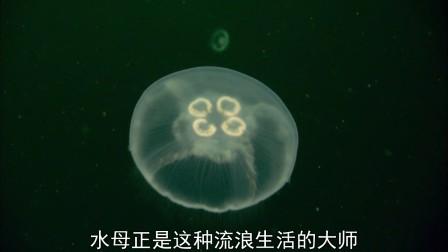 生命·08.海洋无脊椎动物.(上)