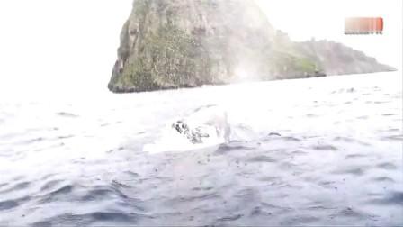 逆戟鲸对战鲨鱼 杀人鲸团队合作 拿下虎鲸 ?http://zhengxing.zjol.com.cn/mls-hxs/