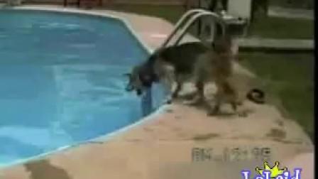 搞笑跳水视频.3gp