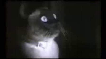 32 搞笑小品 搞笑动物 猫