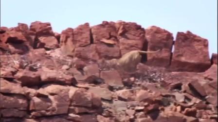 行星地球特别版:沙漠狮 中文字幕
