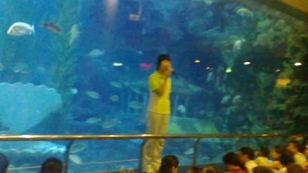 海底世界美人鱼表演主持解说