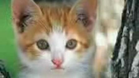 搞笑猫咪_标清