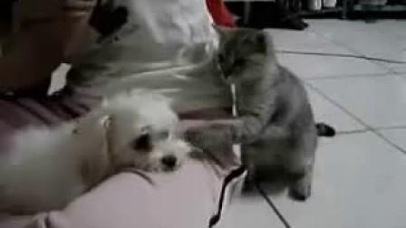 瞧瞧这只小猫有多欠