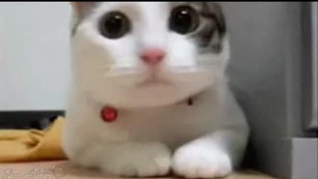跳舞之猫王,喵喵 www.disneyguide.com.cn