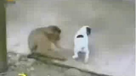 你知道猴子在笑什么吗