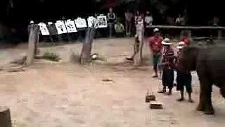 大象的精准射击www.shxqm.cn