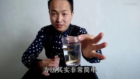 魔术教学:空手变出活鱼 太不可思议了