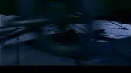 黑玫瑰狐电视连续剧在线观看1