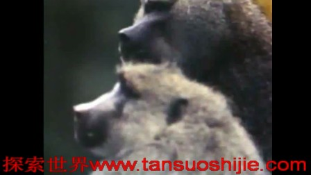 xingwww.tansuoshijie.com动物世界性行为-猩猩