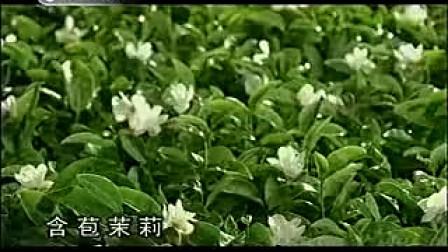 【七】林依晨 周渝民 康师傅茉莉茶2009广告