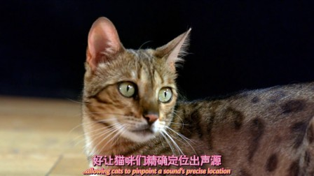 BBC 猫咪观察 第1集