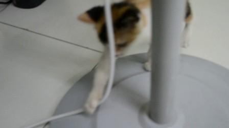 萌猫tiger在办公室里看看有没有自己的办公桌-www.dynamickids.com.cn