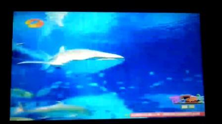 黄轩胡杏儿进入长隆海洋王国水底世界(大玻璃里)喂鱼