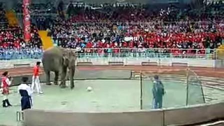 足球动物运动明星——大象
