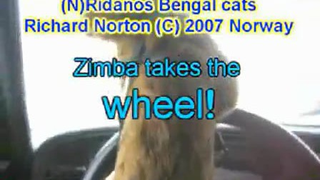 Zimba Takes the Wheel