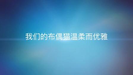 布偶猫舍365AceBaby.com -Bye 2015