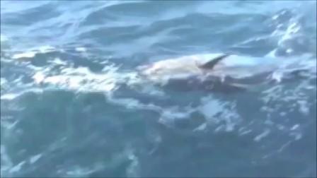 ノースカロライナのマグロキャスティング2012-2014 Bluefin Tuna Northcarolina