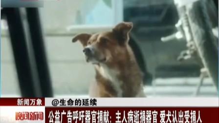 公益广告呼吁器官捐献:主人病逝捐器官  爱犬认出受捐人 晚间新闻报道 150527