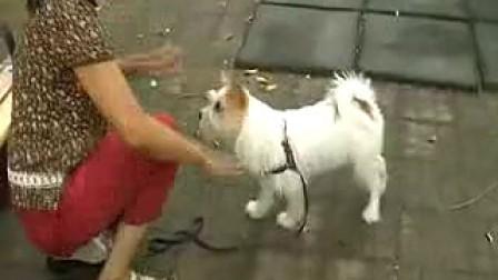 我训练的小狗表演