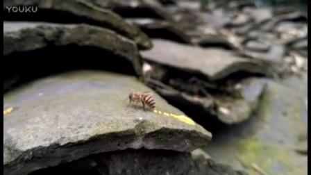 用手机记录养蜂生活 - - 蜂拉臭臭