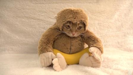 求心理阴影面积!主淫硬是把猫打扮成猴