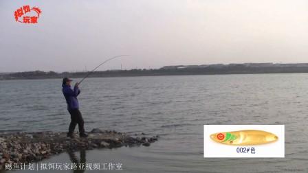 1.42米鳡鱼路亚视频之鳡鱼计划(二)-上海长江围河