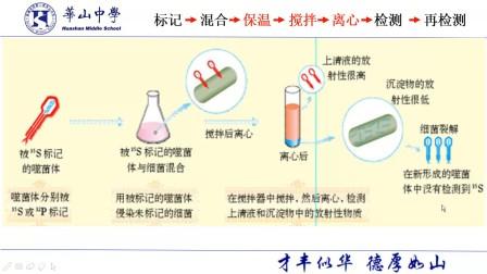 2.3.3噬菌体侵染大肠杆菌实验分析