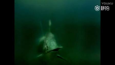 第72届奥斯卡金像奖最佳动画片《老人与海》