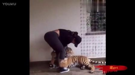 为什么要丢我一只虎在这里?虎虎舍不得你啊!!!