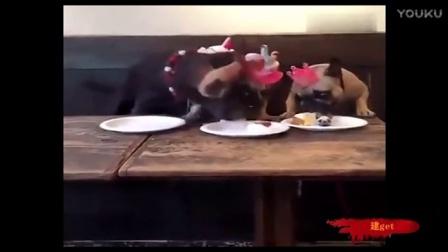 跟战斗力超强的吃货聚餐时,下嘴一定要快啊这速度也是没谁了!