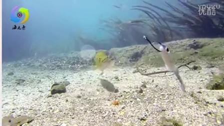 海员之水下拍摄路亚大口鲈鱼咬钩瞬间