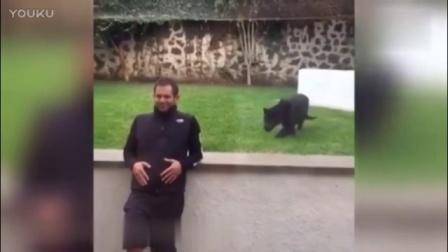 一只黑豹潜伏在男子身后,最后发动袭击一幕让人汗颜