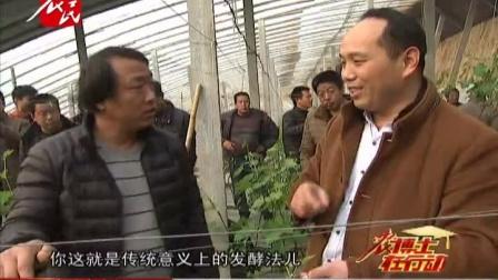 河北农民频道《农博士在行动》之温室长绿苔怎么办(饶阳葡萄)