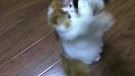 爱丽丝梦幻猫苑--甜杏