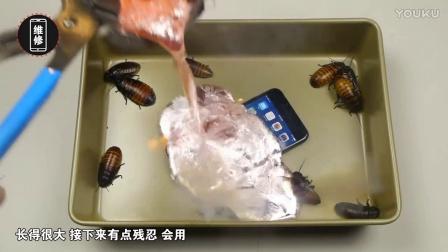 「果粉堂」iPhone7plus+超大蟑螂+沸腾铝液 会变成怎样?