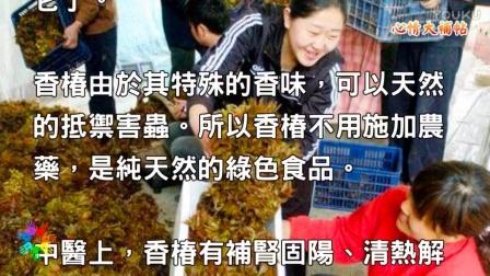 """农村人舍不得吃的""""保健菜"""",补肾固阳,在城里高达几十元人民币一斤!"""