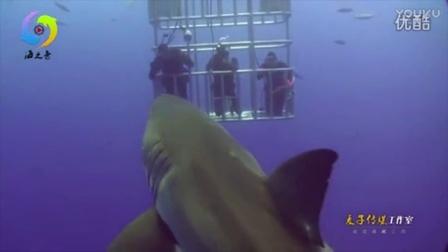 """海员之惊险!潜水员海底铁笼赏鱼 闪光灯激怒鲨鱼""""毒气弹"""""""