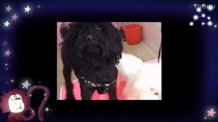 爱狗生活:妖怪影像