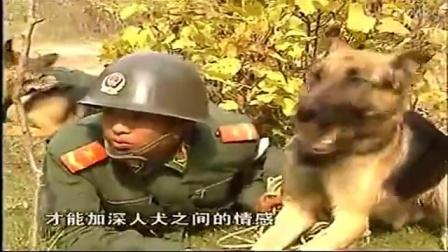 中国河北军犬基地-狗狗秃毛癣图片