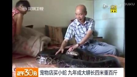 老夫妻在家养了条一百多斤大蛇,越养越大结果没想到!