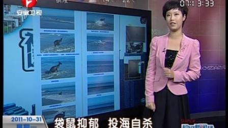 袋鼠抑郁 投海自杀