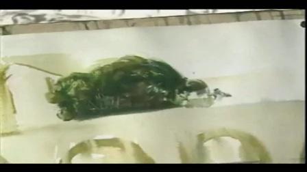 速写培训〖q89〗[中央美术学院:王维新主讲:水彩画技法].王维新.第一讲_5水粉静物