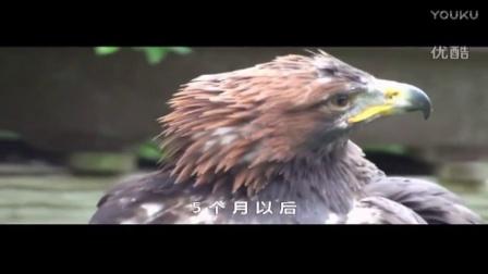 鹰之蜕变_成品
