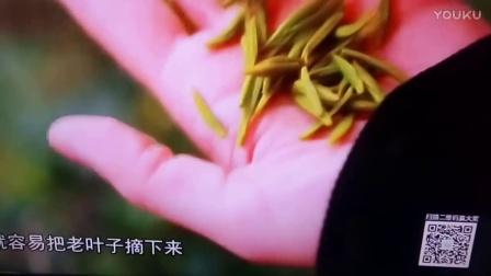 """重庆都市频道""""周末去哪里""""万盛,茶山,山青水秀介轺!"""