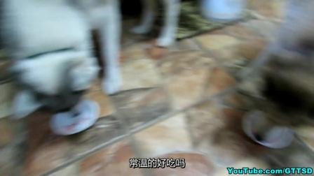 外国人家里的狗之草莓冰激凌和杯子蛋糕 (中文字幕)