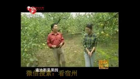 魅力安徽-砀山酥梨